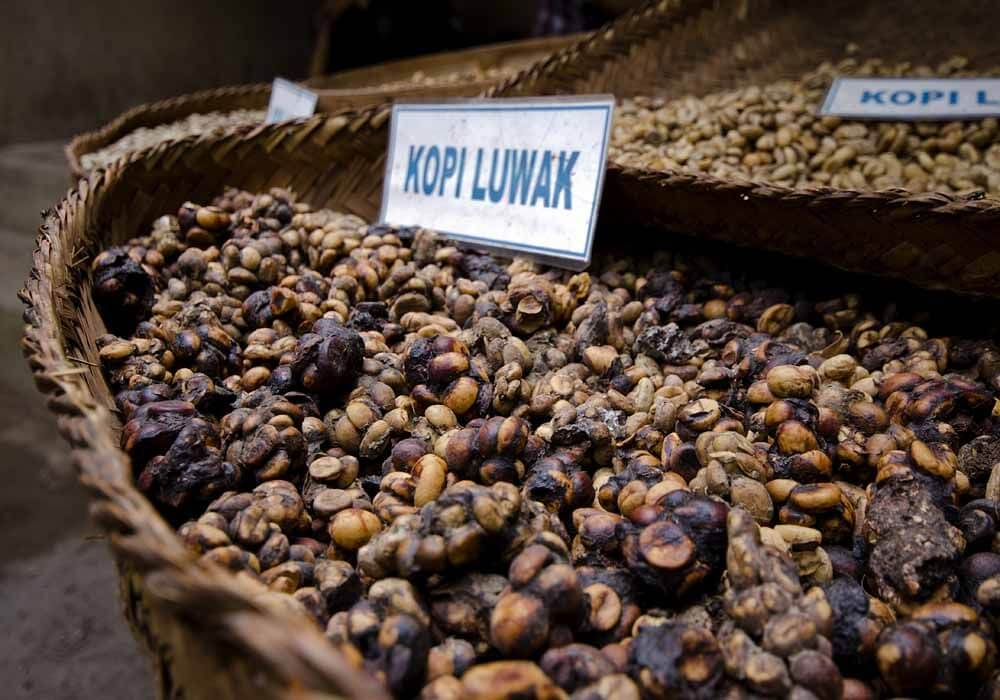 Kopi Luwak for sale
