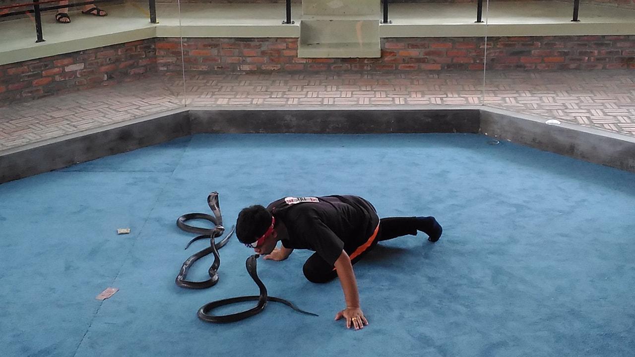 Шоу укротителя змей
