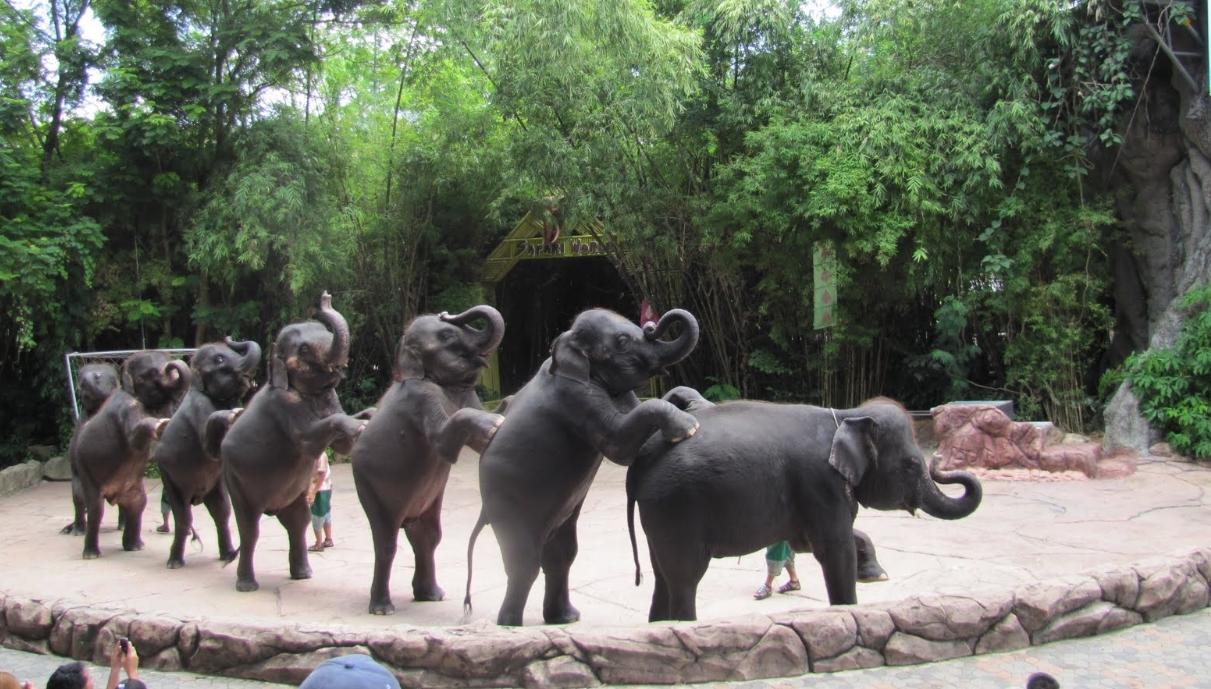 Выступления со слонами