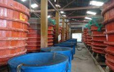 Фабрика рыбного соуса